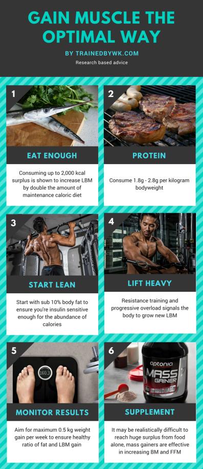 Gain Muscle the optimal way (1)